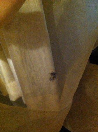 Rainbow Casino Hotel : dead moth mark on blinds