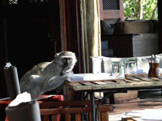 andBeyond Nxabega Okavango Tented Camp: Unwelcome lunch guest