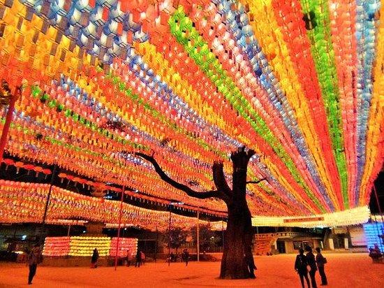Jogyesa Temple: エンジュの木