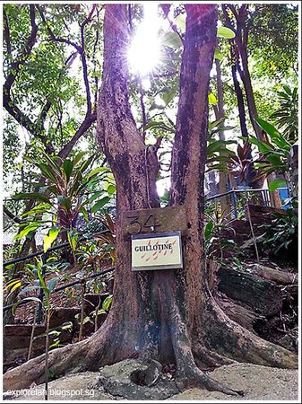 Penang War Museum: A tree that grew up on blood... this is the site where many behandings reportedly took place dur