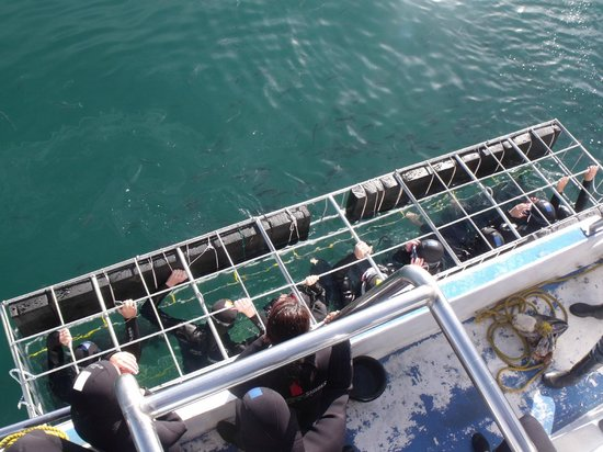 Shark Cage Diving South Africa: Then into the cage !!!