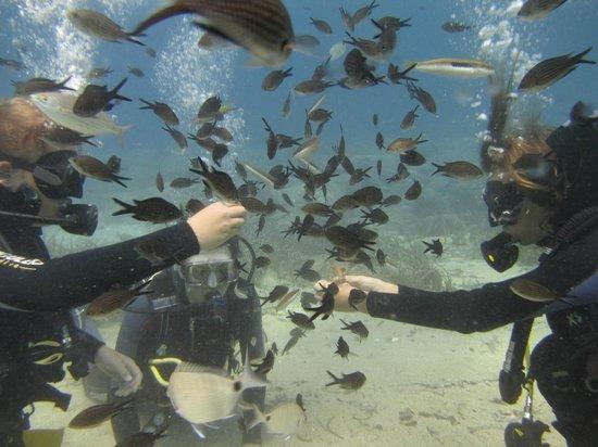 Náxos, Griekenland: Discover Scuba Diving