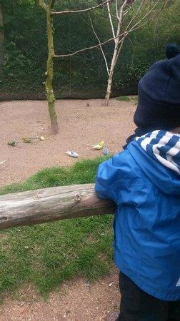 Vogelpark Marlow 3