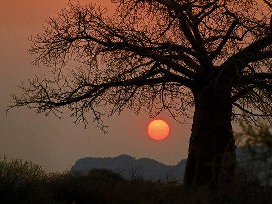 Madi a Thavha Mountain Lodge: Splendid Baobab sunset