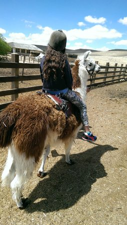 The Alpaca Farm: riding the lamma