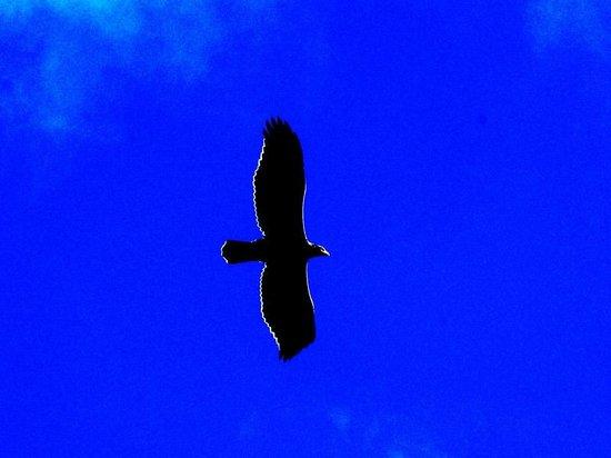 Madi a Thavha Mountain Lodge: Birding