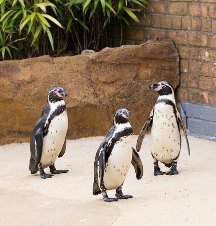Blair Drummond Safari and Adventure Park: Penguins