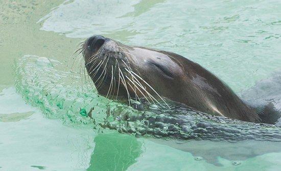 Blair Drummond Safari and Adventure Park: Sea lion