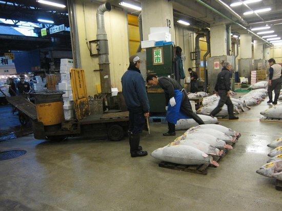 The Tsukiji Market: Tuna quality check