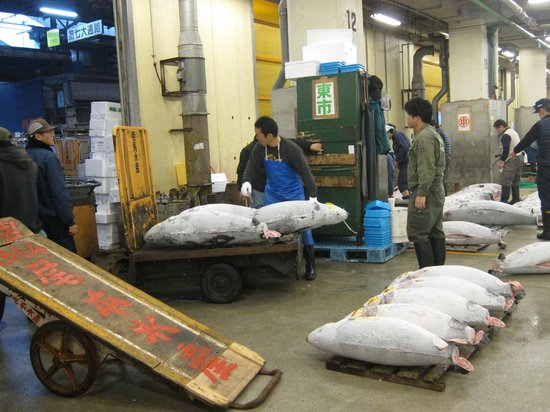 The Tsukiji Market: Auction in Action - loading the selected Tuna