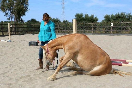 Arion Stables : Zara und ihr Pferd