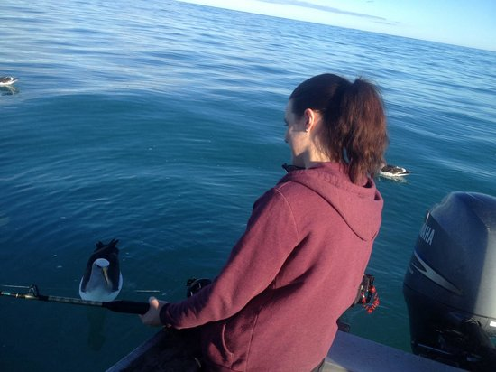 Koura Bay Fishing Charters: Friendly albatross