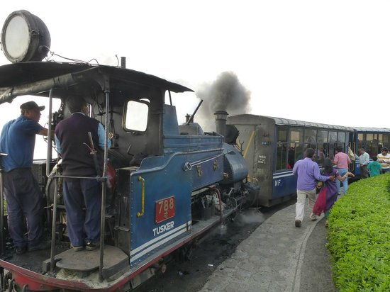 Kanchenjunga Mountain : Toy ride with steam train in Darjeeling