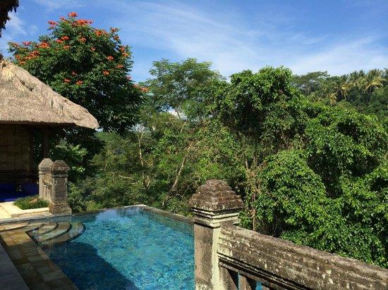 Puri Wulandari Boutique Resort: Lush tropical jungle views.
