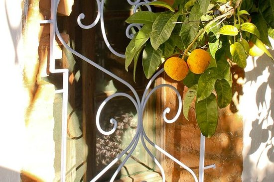 Auberge Dardara : Fresh fruit in the garden