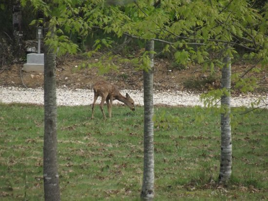 Cabanes Perchées dans les Arbres : Le plaisir du matin.....