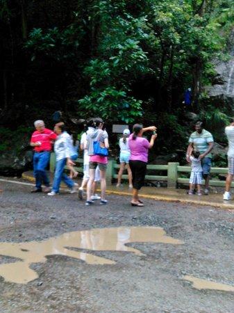 La Coca Falls: La Coca at The Rain  Forest