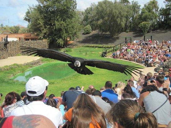 Rancho Texas Lanzarote Park: Bird of prey show