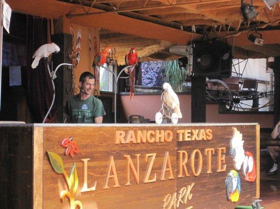 Rancho Texas Lanzarote Park: Parrot show
