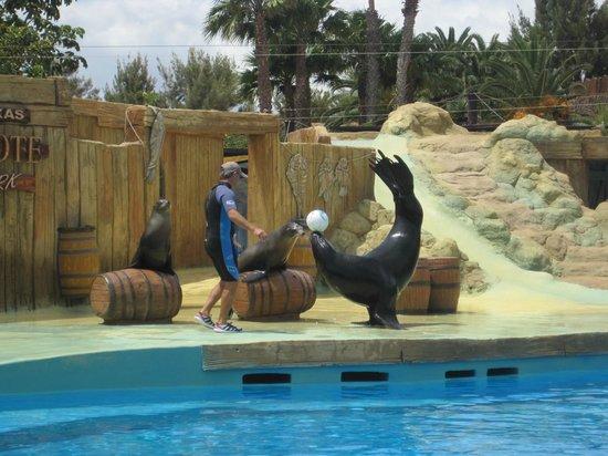 Rancho Texas Lanzarote Park: Sea lion show