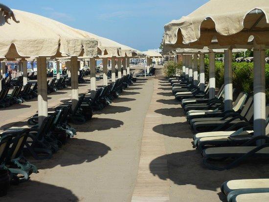 Maritim Pine Beach Resort: shade
