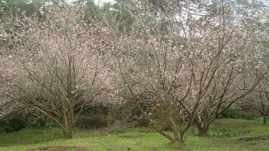 Parque das Cerejeira