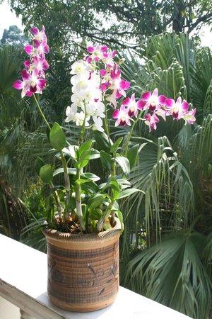 Garden Home Kata: Our Orkide