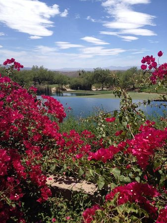 Loews Ventana Canyon Resort : Another grounds view