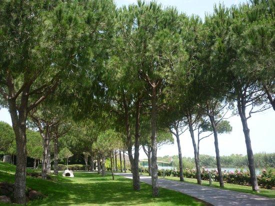 Xanadu Resort Hotel : Pines