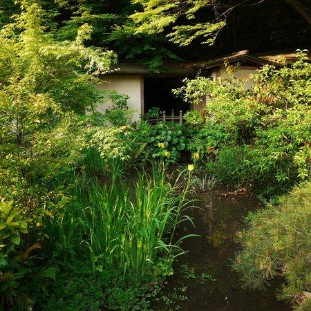 Daimaru Betso: 緑の美しい庭