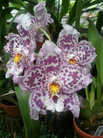 Orchids in the Berggarten