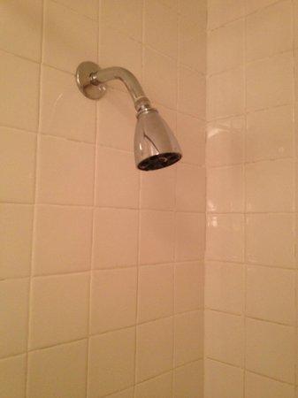 Park Lane Hotel : Showerhead