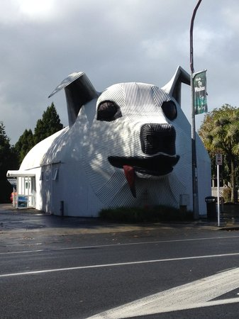 Tirau, New Zealand: The dog!