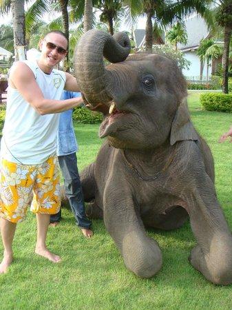 """Sofitel Krabi Phokeethra Golf & Spa Resort : Le """"petit """"+ lors de notre séjour = un éléphanteau ;-) dans les jardins de l'hôtel !"""