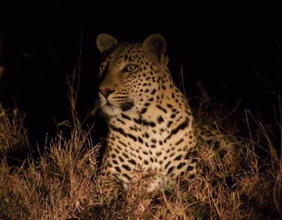 Chitwa Chitwa Private Game Reserve: So close !!
