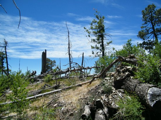 Mt. Lemmon Scenic Byway: top of the mountain