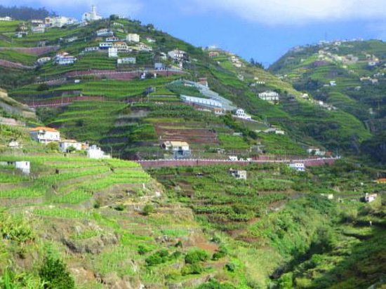 Melia Madeira Mare Resort & Spa: Terraced Agriculture