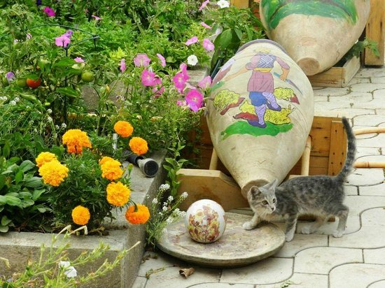 HyeLandz Eco Village Resort: One of our most friendly cats:)