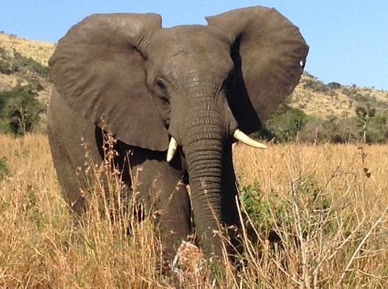 Tim Brown Tours - Durban Safari Tours: first elephant we saw