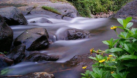 Bali Rahayu Homestay : Jungle hike, organized by homestay