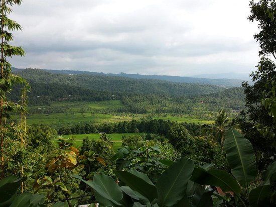Bali Rahayu Homestay : View from the cottage/room