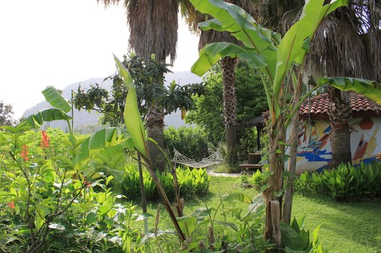 Dalyan Garden Pension: Hammock and Bar