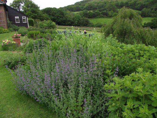 Stable Cottage Tea Room: Another view of the garden