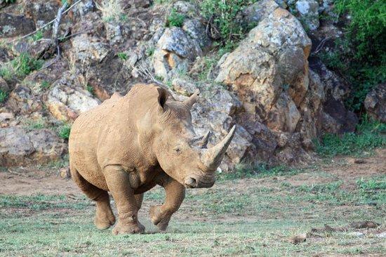 African Safari Guru Tours & Lodge Transfers: Rhino