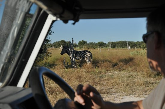 Moremi Wildlife Reserve : animals wander close to the road, they are used to seeing cars but not people