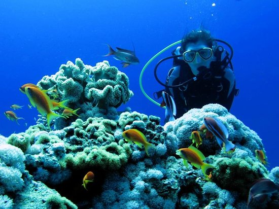 Red Sea Relax Resort: Local Diving