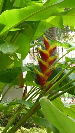 Jardín Botánico: une fleur parmi tant d autres