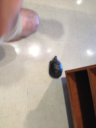Hugh S. Branyon Backcountry Trail: Turtle in the Nature Center