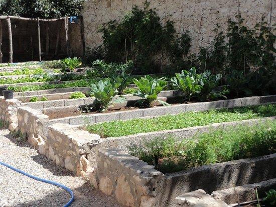 Villa Daba: Jardin