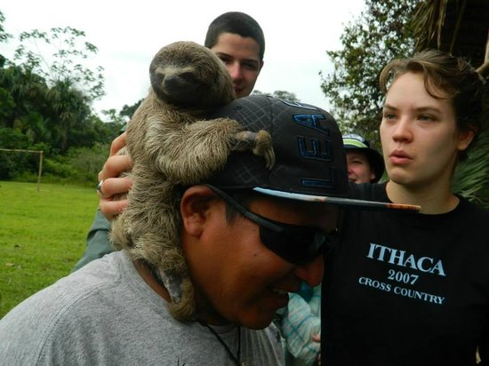 Otorongo Expeditions Jungle Lodge: Baby 3-toed sloth kept as a pet at the Sangregorio Village
